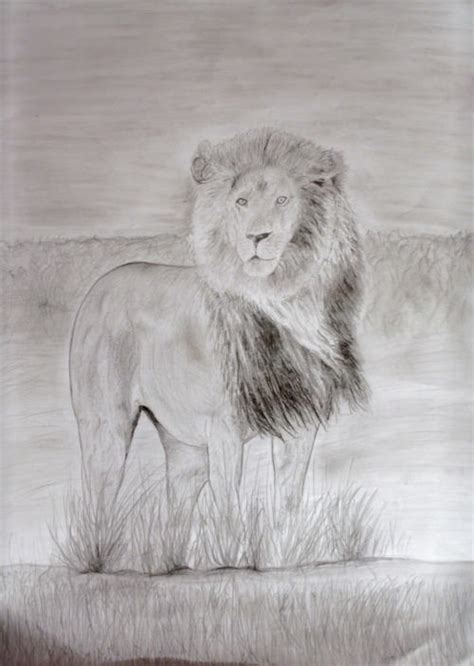 19+ Lion Drawing, Art Ideas, Sketches | Design Trends